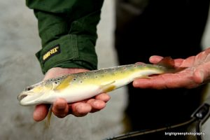 fly fishing beginners day